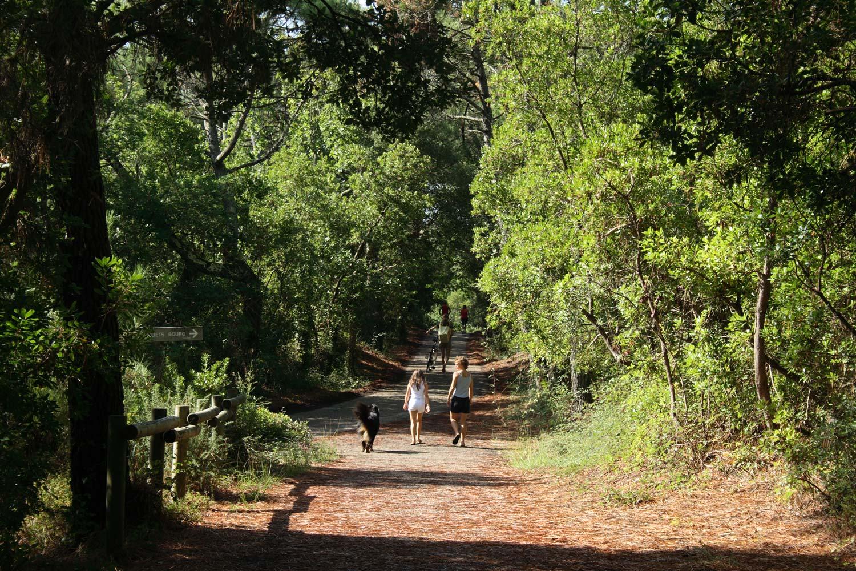 Moliets, promeneurs forêt