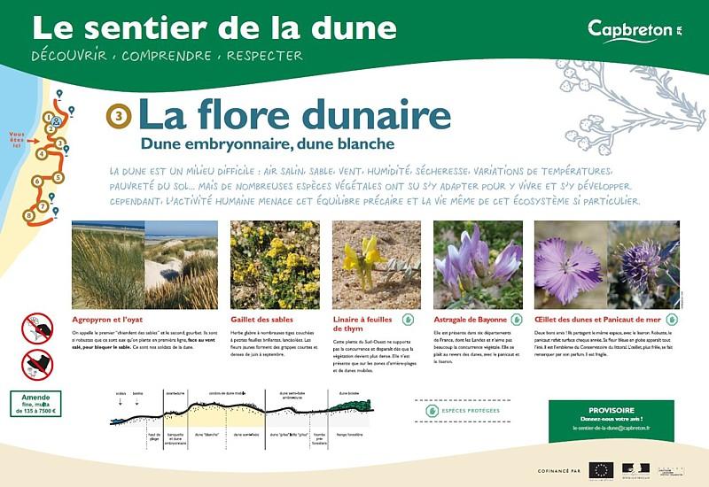 sentier-de-la-dune4