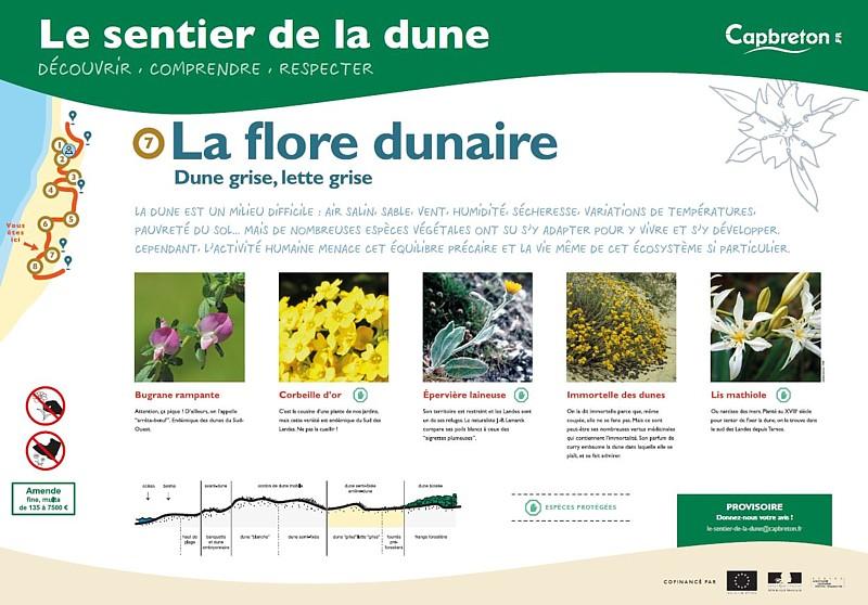 sentier-de-la-dune8