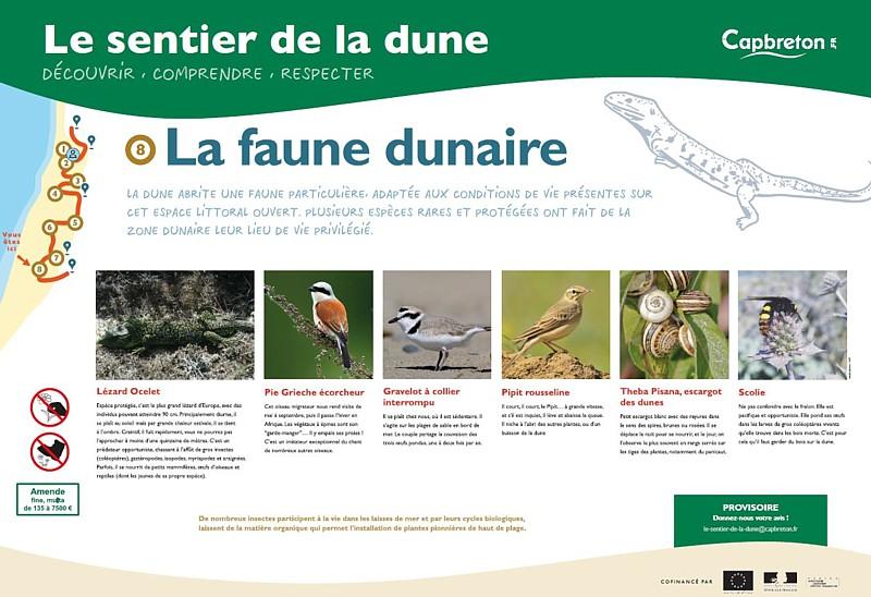 sentier-de-la-dune9